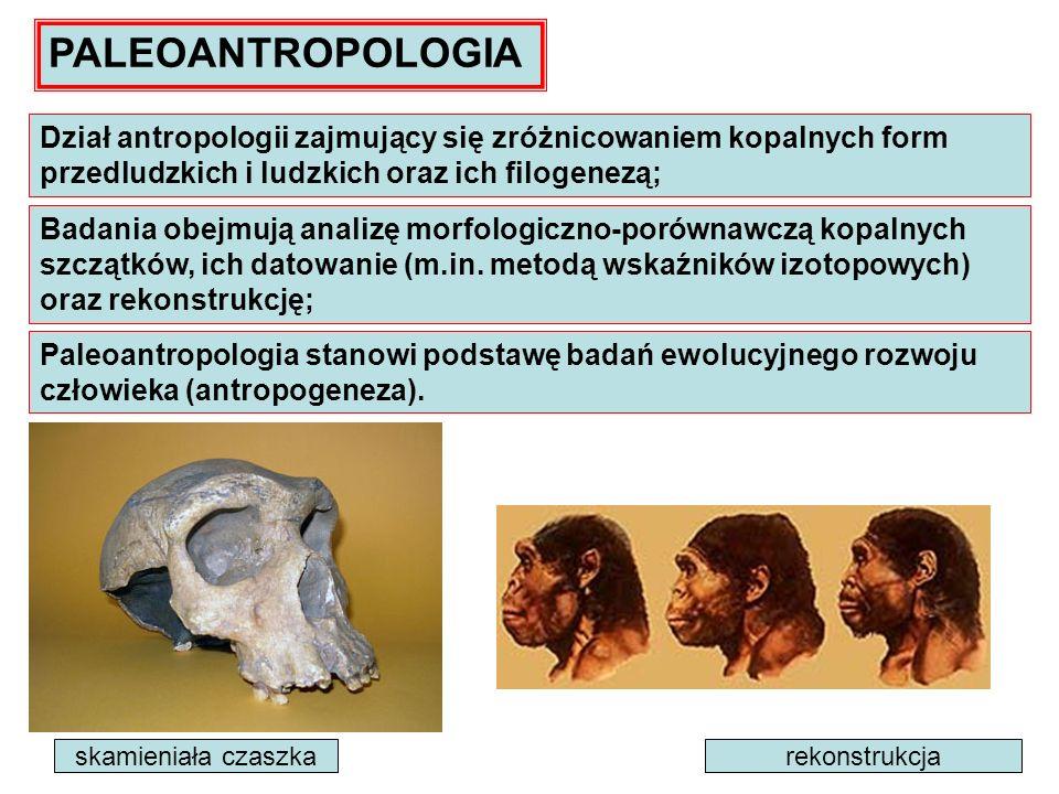 PALEOANTROPOLOGIA Dział antropologii zajmujący się zróżnicowaniem kopalnych form przedludzkich i ludzkich oraz ich filogenezą;