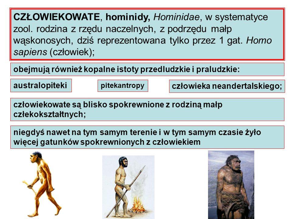 CZŁOWIEKOWATE, hominidy, Hominidae, w systematyce zool