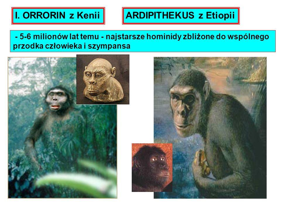 ARDIPITHEKUS z Etiopii