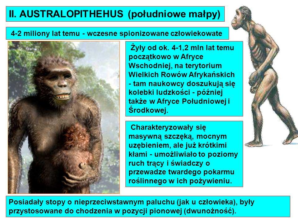 II. AUSTRALOPITHEHUS (południowe małpy)