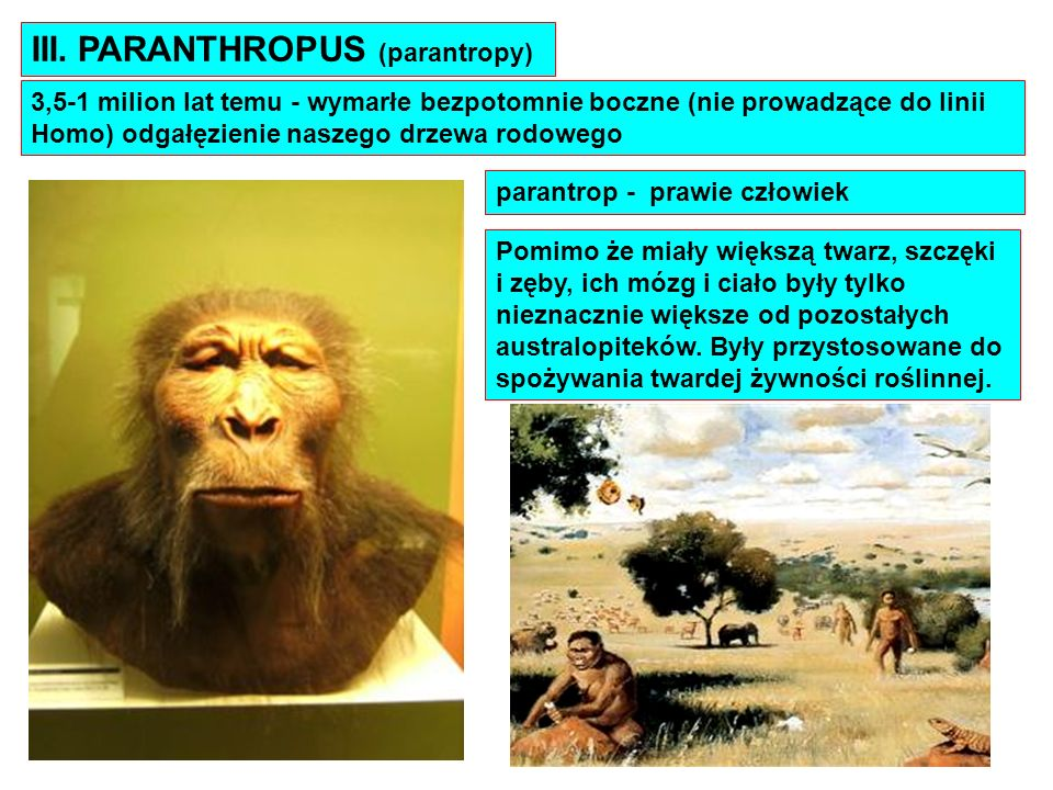III. PARANTHROPUS (parantropy)