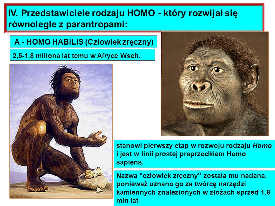 IV. Przedstawiciele rodzaju HOMO - który rozwijał się równolegle z parantropami: