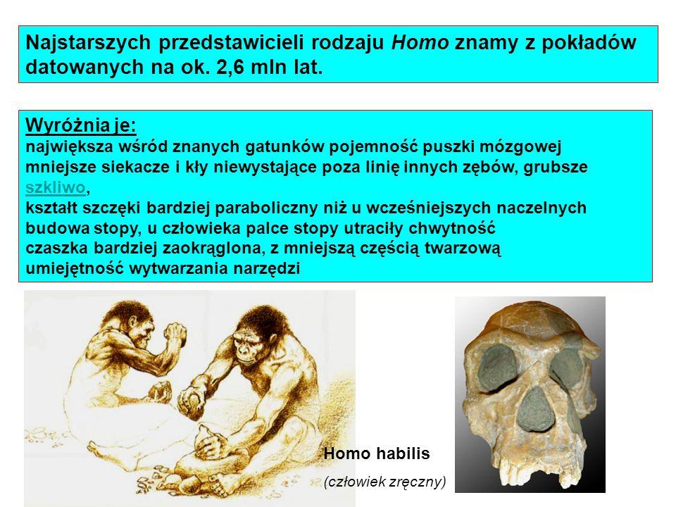 Najstarszych przedstawicieli rodzaju Homo znamy z pokładów datowanych na ok. 2,6 mln lat.
