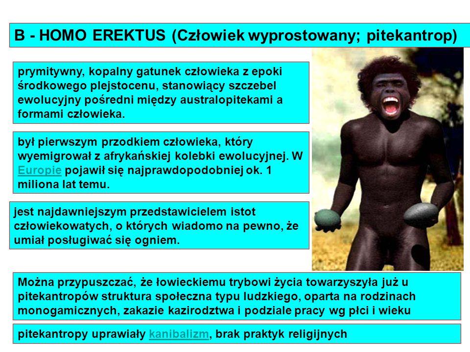 B - HOMO EREKTUS (Człowiek wyprostowany; pitekantrop)