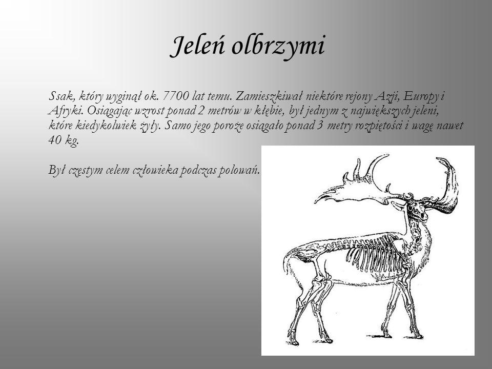 Jeleń olbrzymi