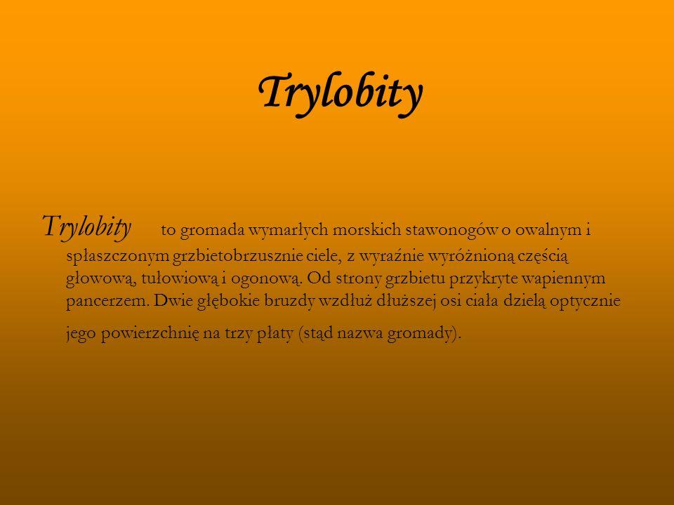 Trylobity