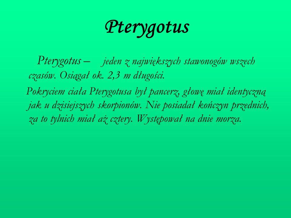 Pterygotus Pterygotus – jeden z największych stawonogów wszech czasów. Osiągał ok. 2,3 m długości.
