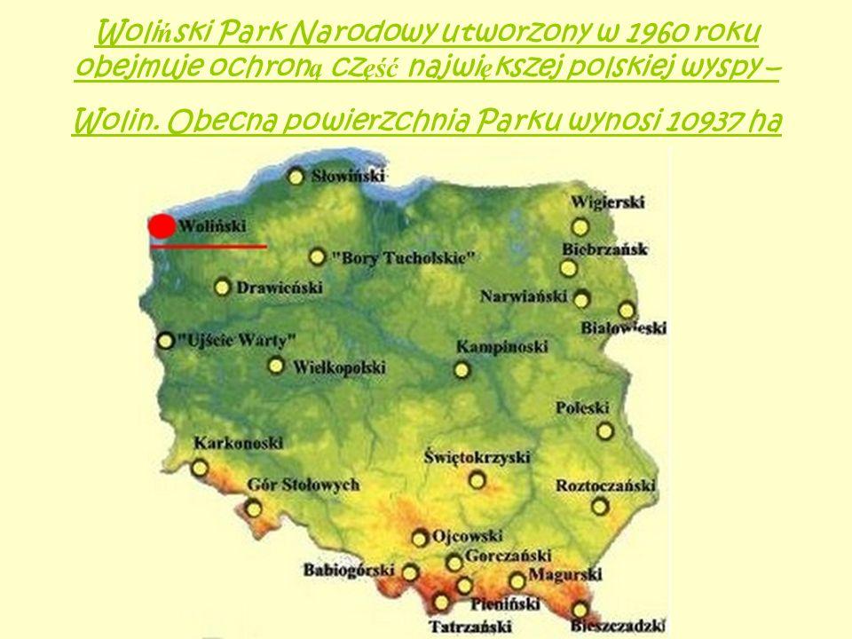 Woliński Park Narodowy utworzony w 1960 roku obejmuje ochroną część największej polskiej wyspy – Wolin.