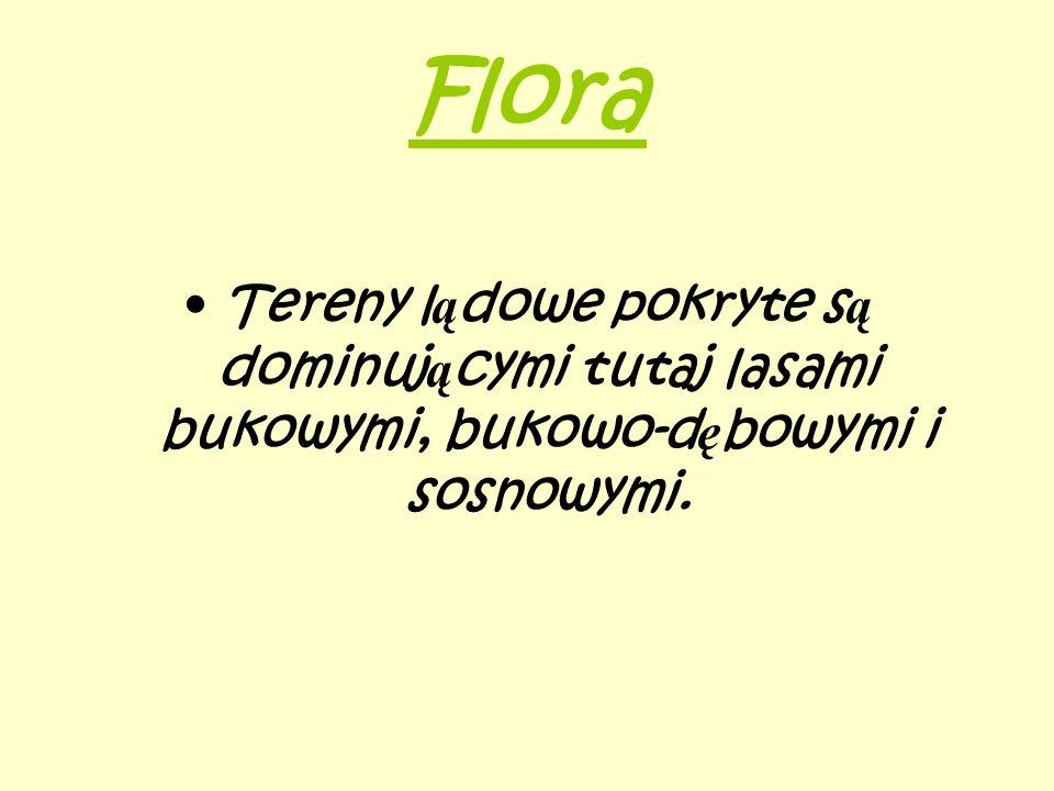 Flora Tereny lądowe pokryte są dominującymi tutaj lasami bukowymi, bukowo-dębowymi i sosnowymi.