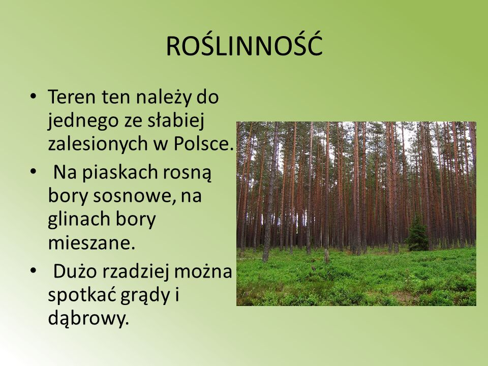 ROŚLINNOŚĆ Teren ten należy do jednego ze słabiej zalesionych w Polsce. Na piaskach rosną bory sosnowe, na glinach bory mieszane.