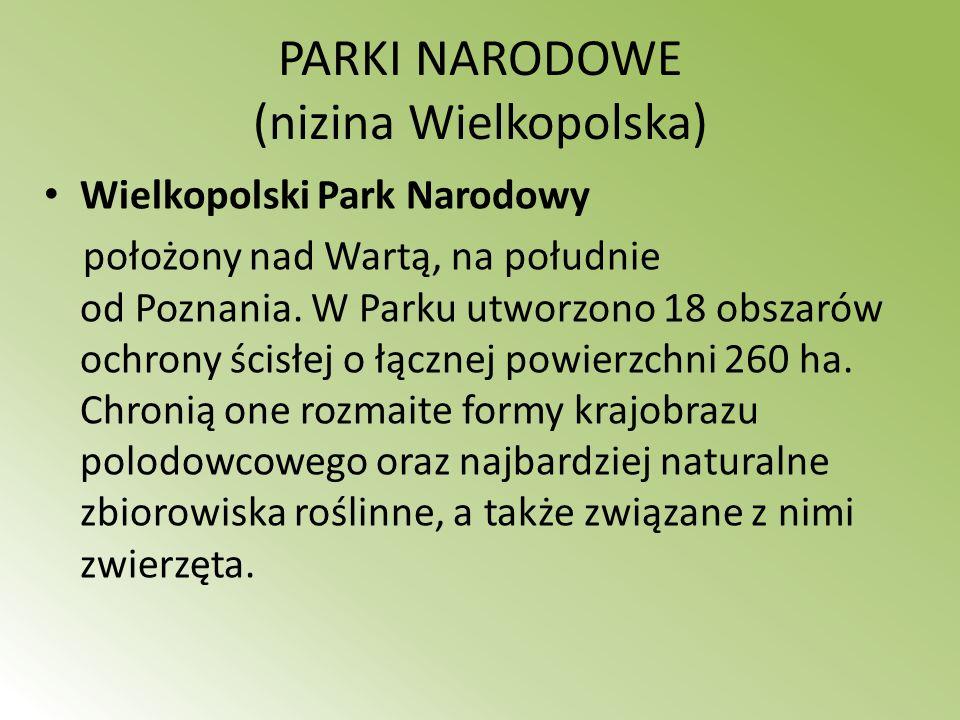 PARKI NARODOWE (nizina Wielkopolska)