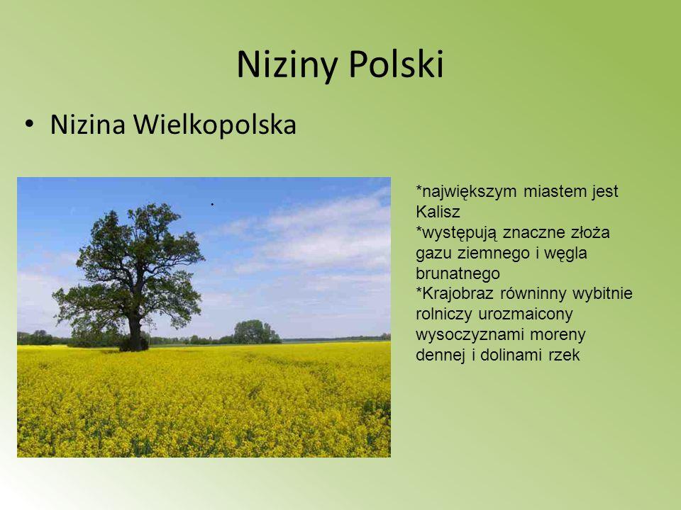 Niziny Polski Nizina Wielkopolska