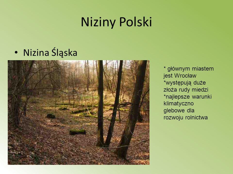 Niziny Polski Nizina Śląska