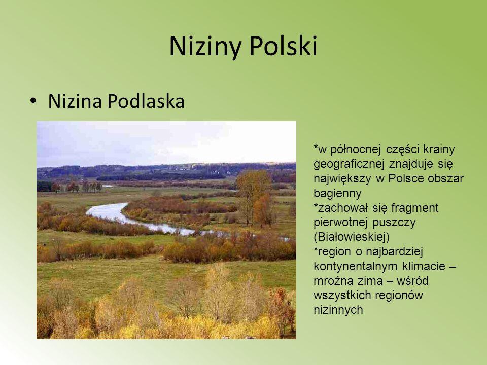 Niziny Polski Nizina Podlaska