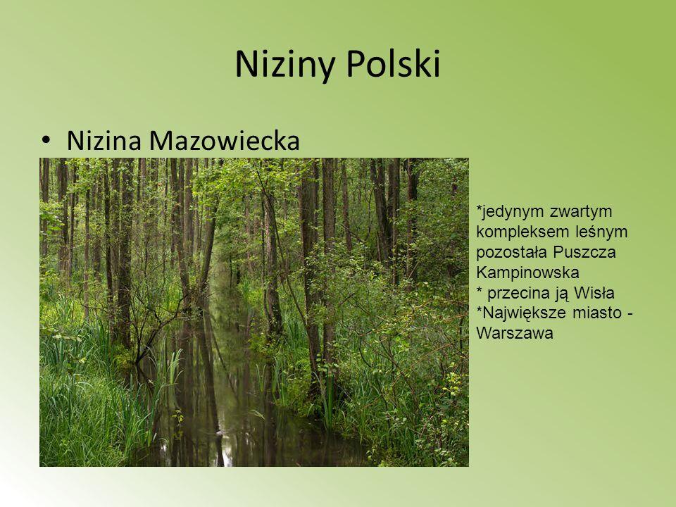 Niziny Polski Nizina Mazowiecka