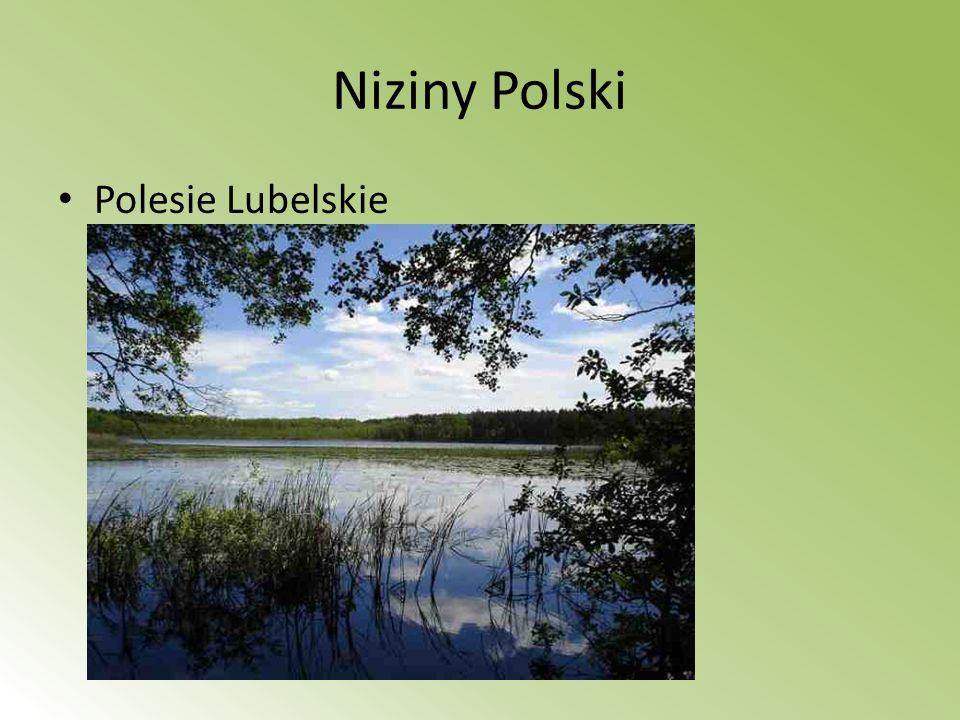 Niziny Polski Polesie Lubelskie