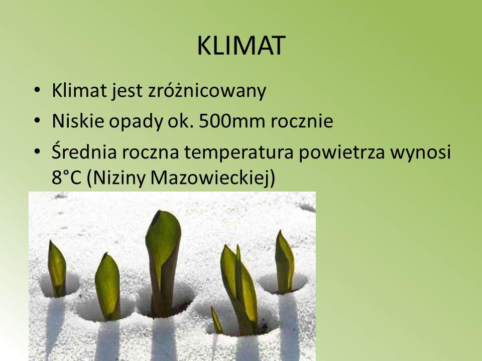 KLIMAT Klimat jest zróżnicowany Niskie opady ok. 500mm rocznie