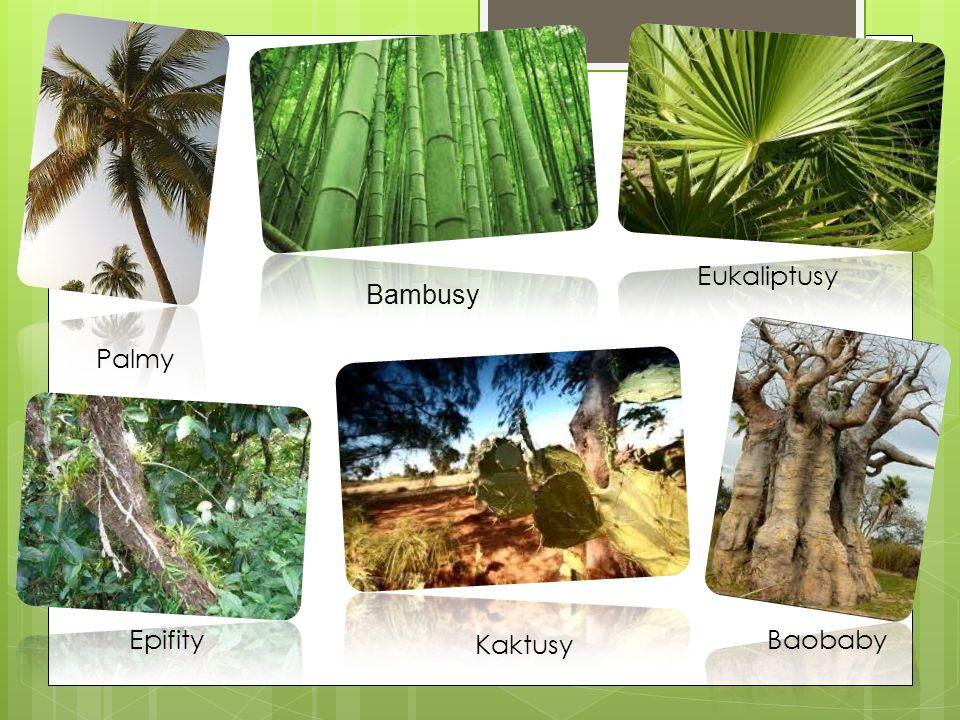 Eukaliptusy Bambusy Palmy Epifity Kaktusy Baobaby