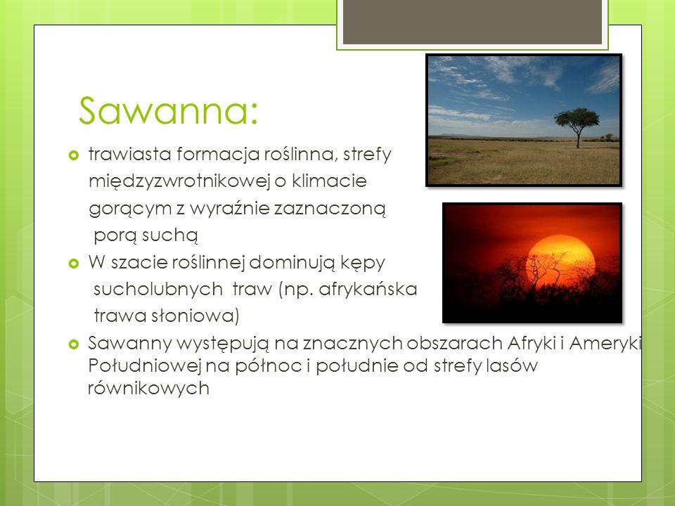 Sawanna: trawiasta formacja roślinna, strefy