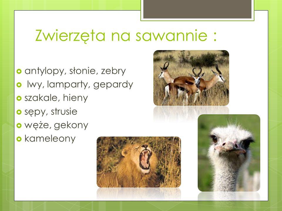 Zwierzęta na sawannie :