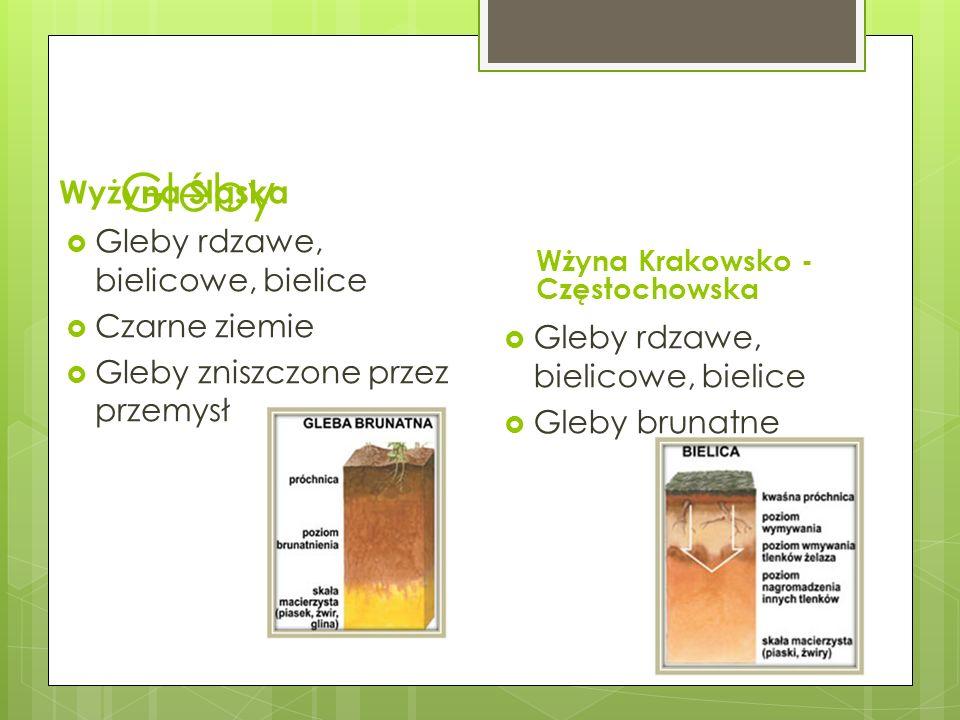 Gleby Wyżyna Śląska Gleby rdzawe, bielicowe, bielice Czarne ziemie
