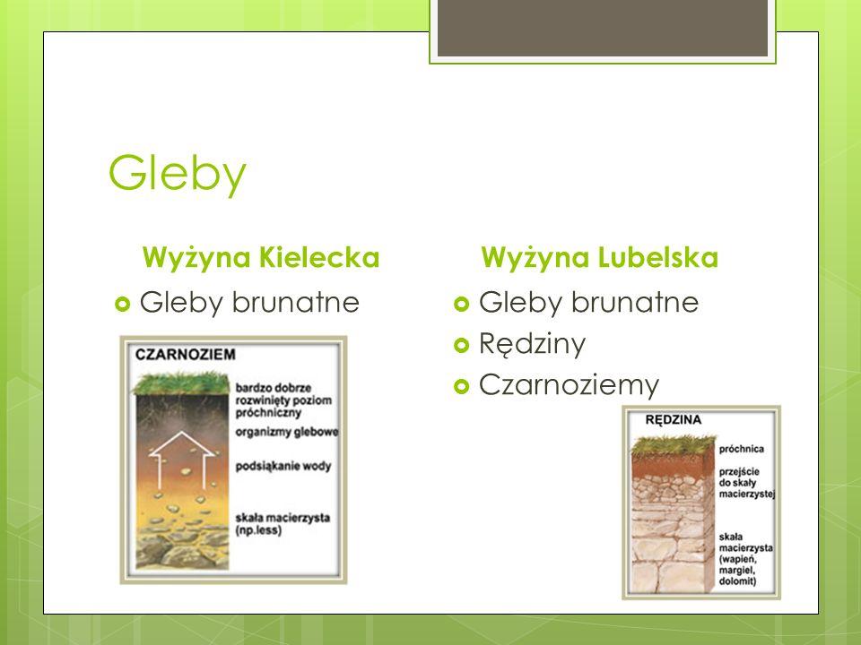 Gleby Wyżyna Kielecka Wyżyna Lubelska Gleby brunatne Gleby brunatne