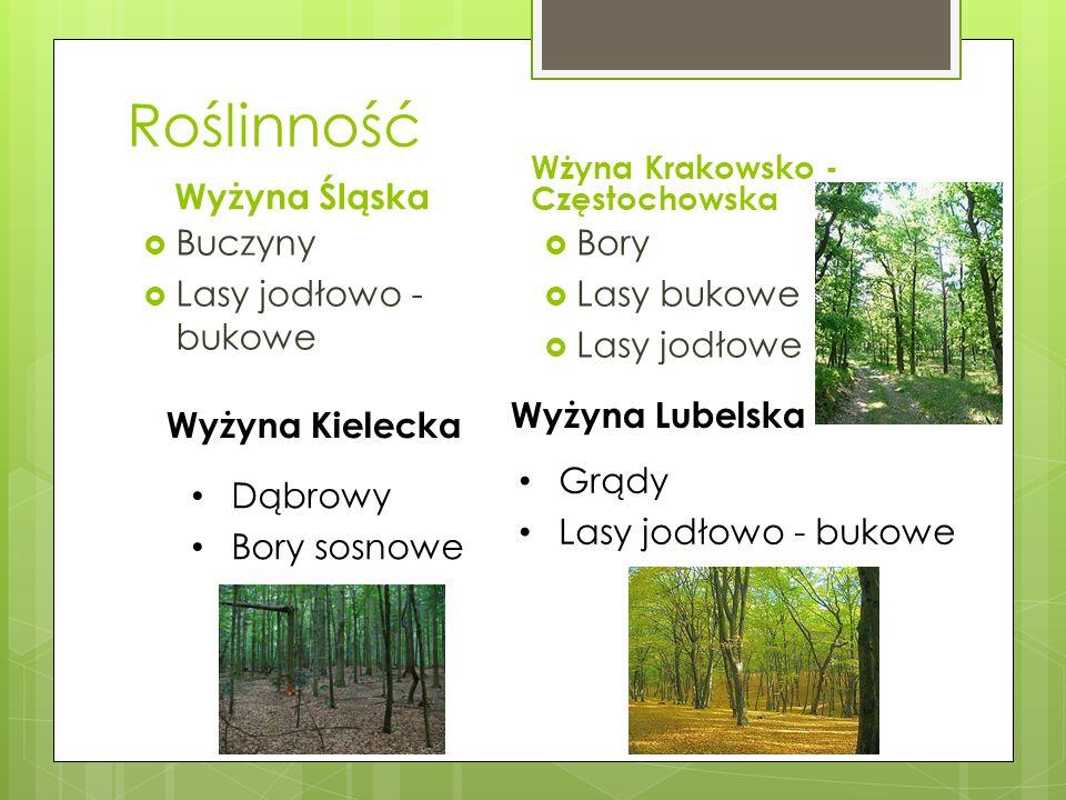Roślinność Wyżyna Śląska Buczyny Lasy jodłowo - bukowe Bory