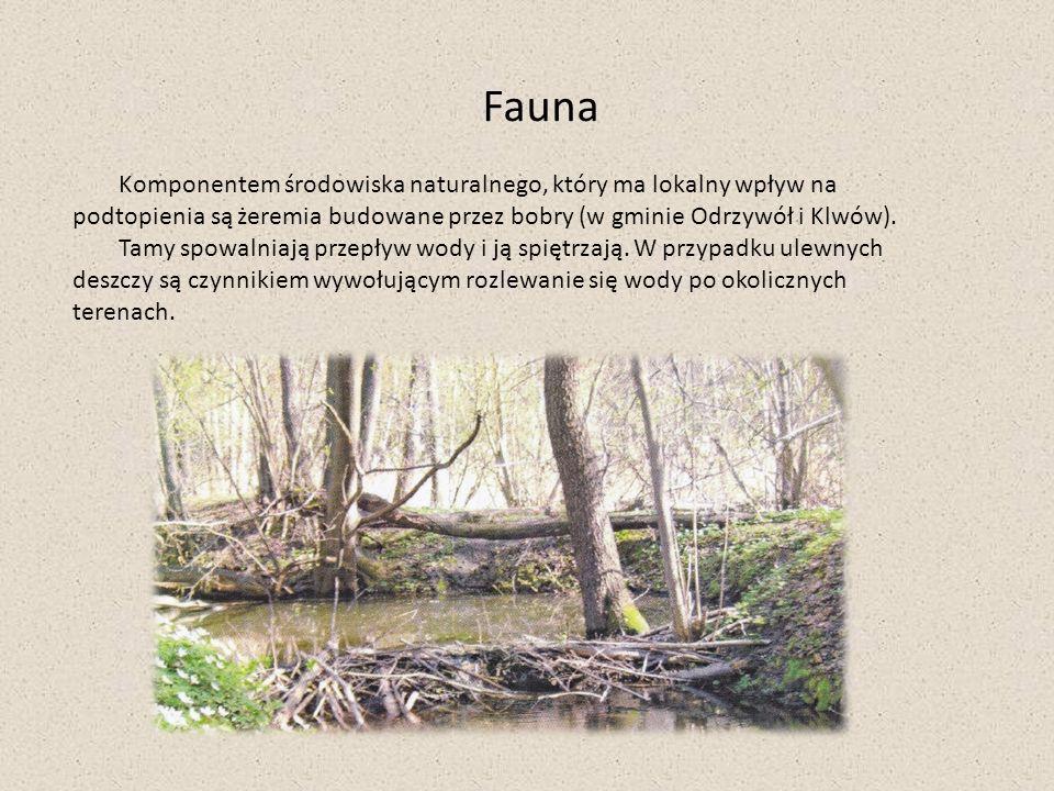Fauna Komponentem środowiska naturalnego, który ma lokalny wpływ na