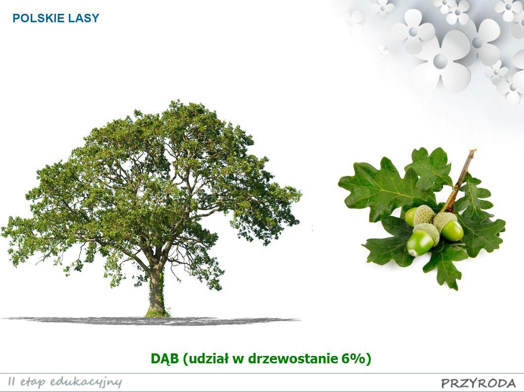DĄB (udział w drzewostanie 6%)