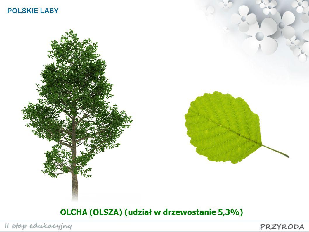 OLCHA (OLSZA) (udział w drzewostanie 5,3%)