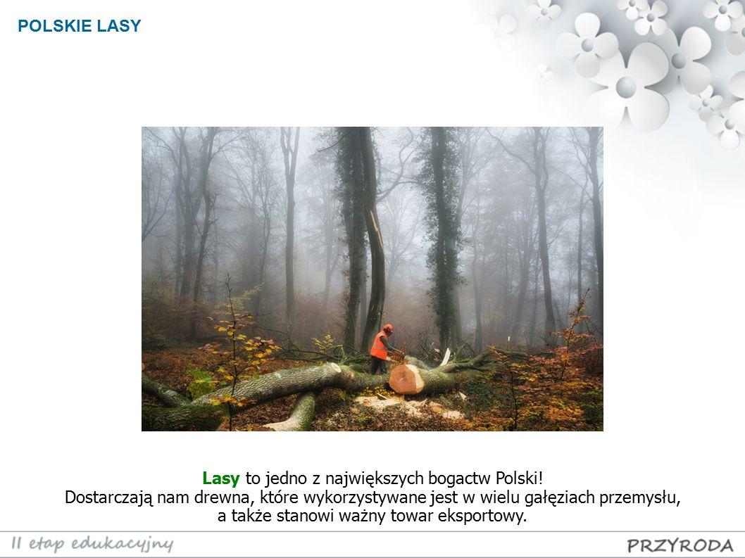 Lasy to jedno z największych bogactw Polski!
