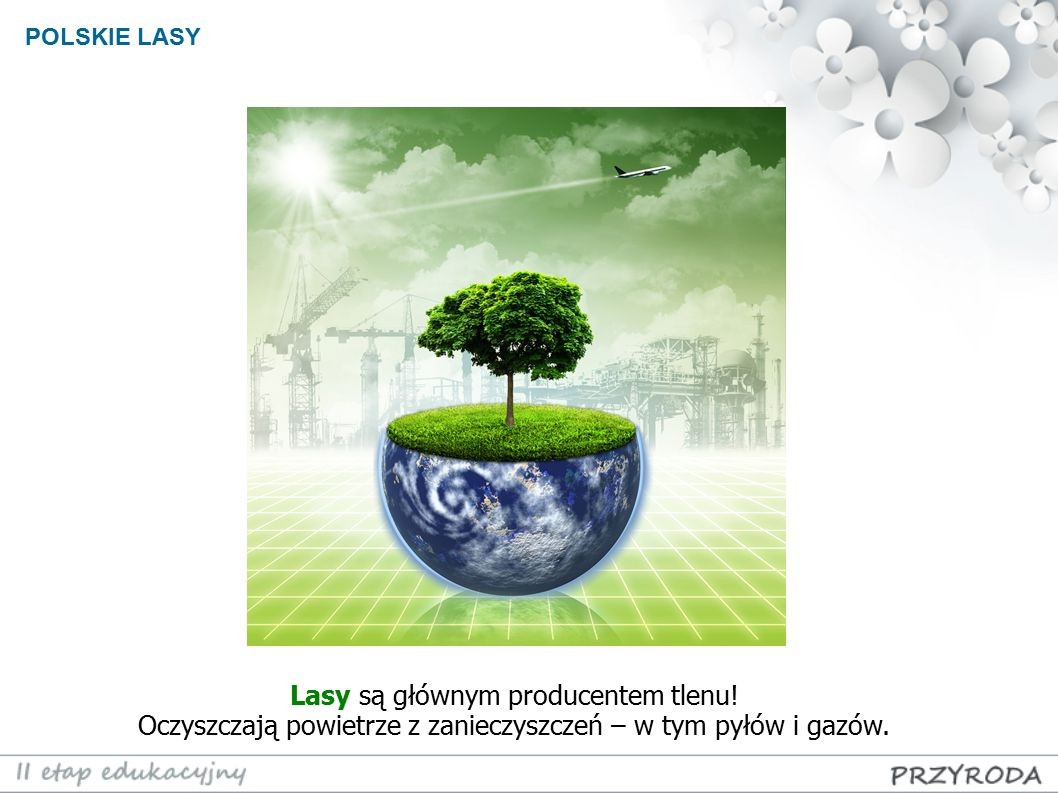 Lasy są głównym producentem tlenu!