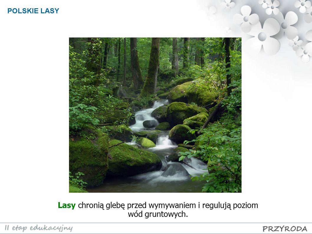 Lasy chronią glebę przed wymywaniem i regulują poziom