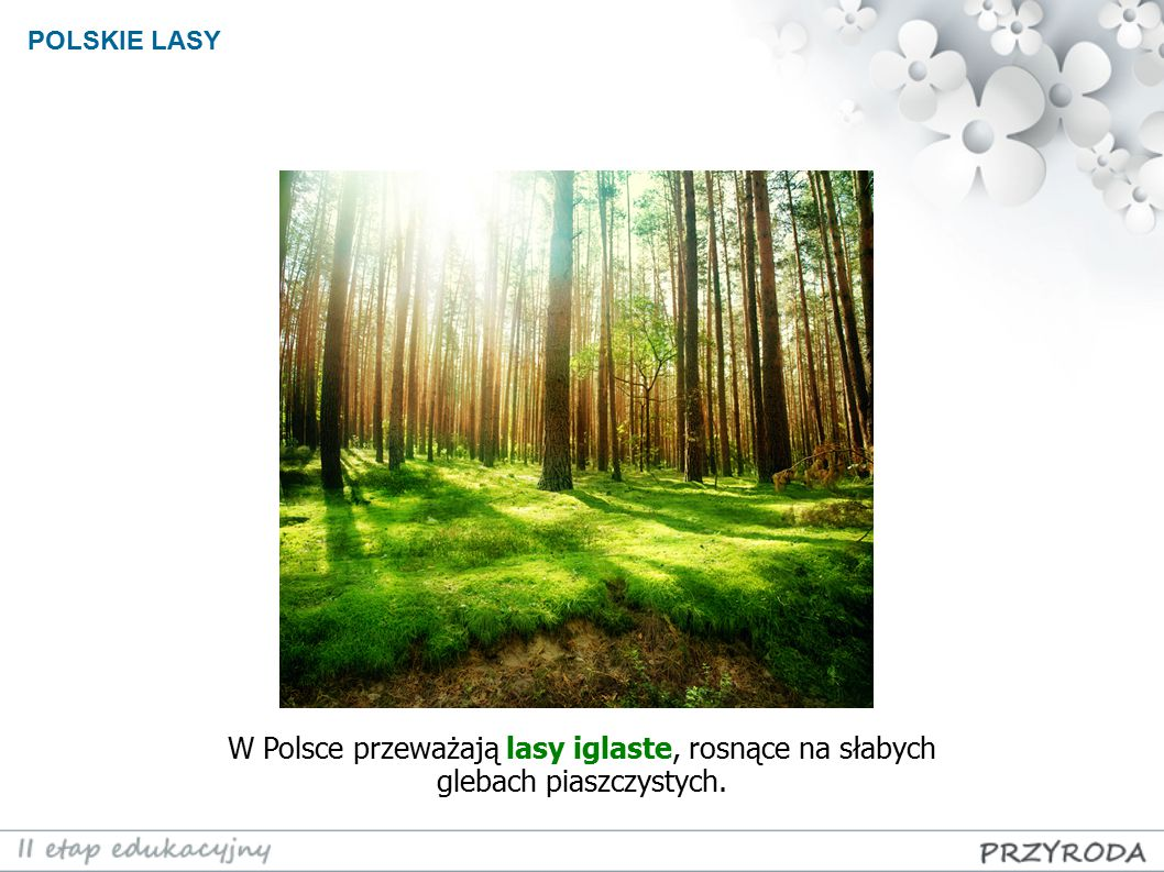 W Polsce przeważają lasy iglaste, rosnące na słabych