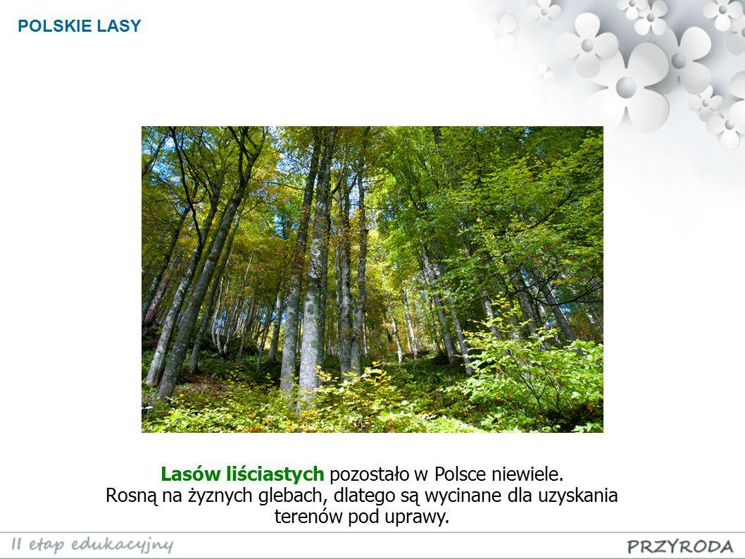 Lasów liściastych pozostało w Polsce niewiele.