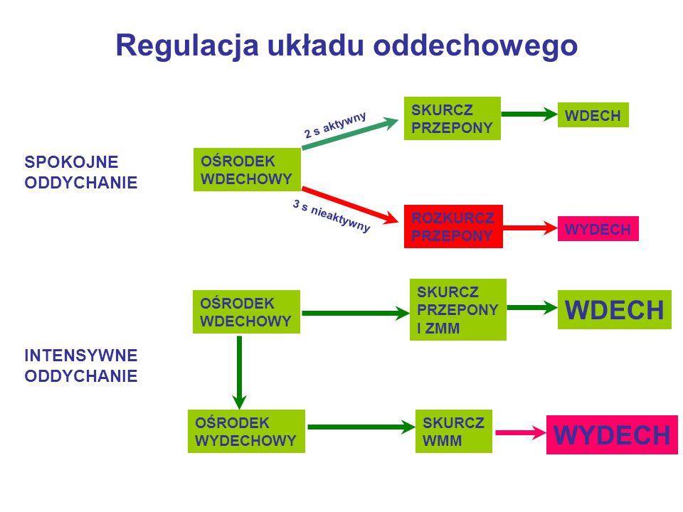 Regulacja układu oddechowego