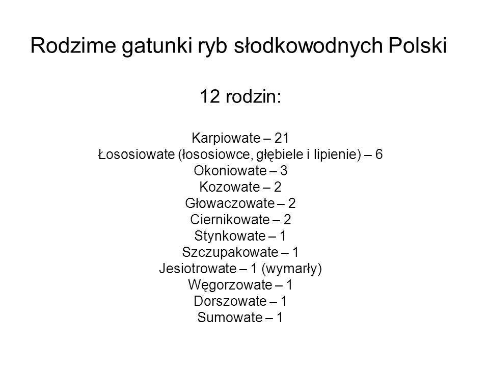 Rodzime gatunki ryb słodkowodnych Polski