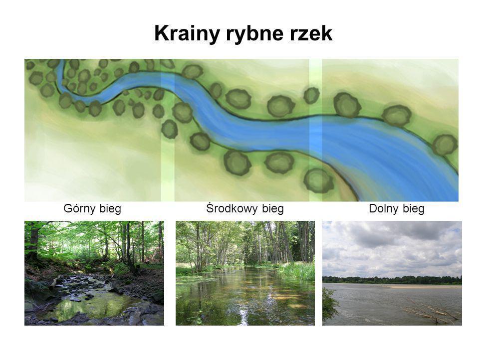Krainy rybne rzek Górny bieg Środkowy bieg Dolny bieg