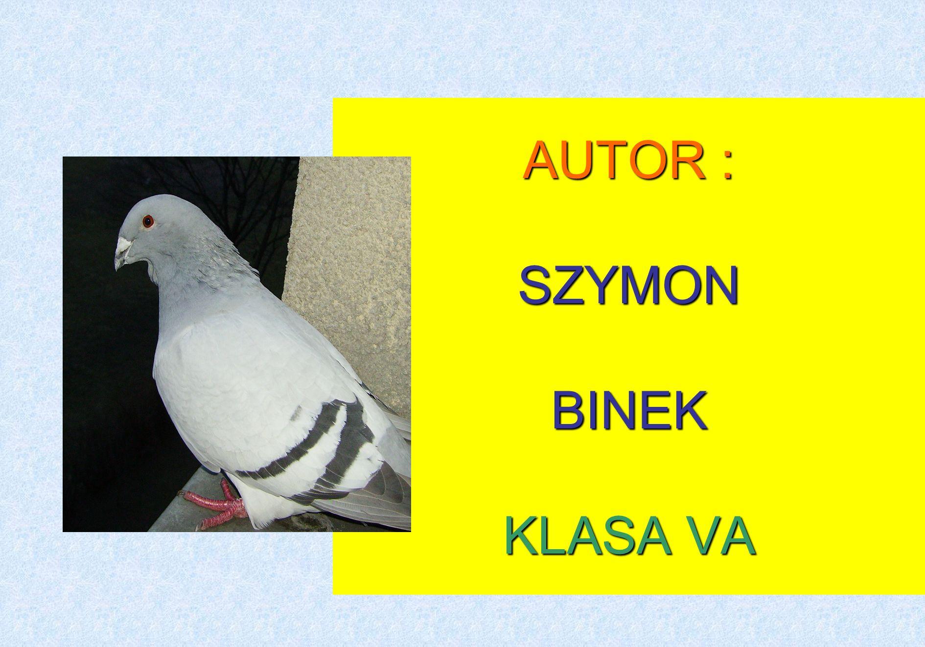 AUTOR : SZYMON BINEK KLASA VA