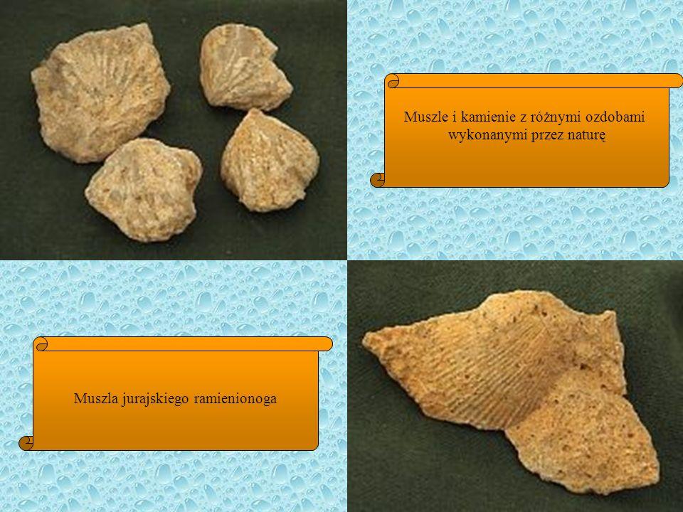 Muszle i kamienie z różnymi ozdobami wykonanymi przez naturę