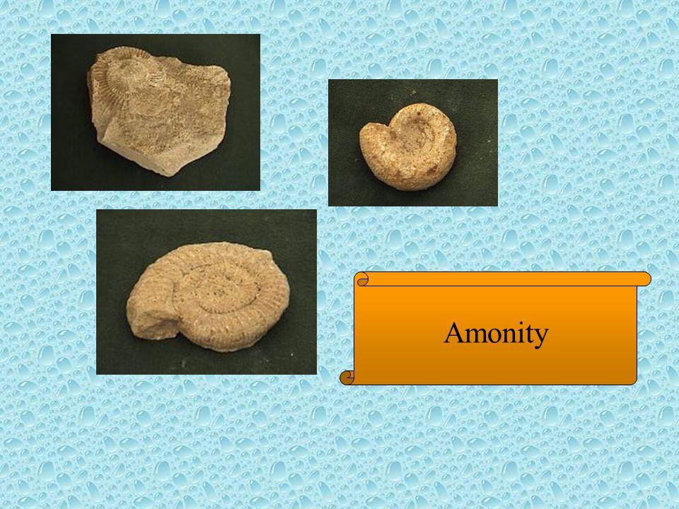 Amonity