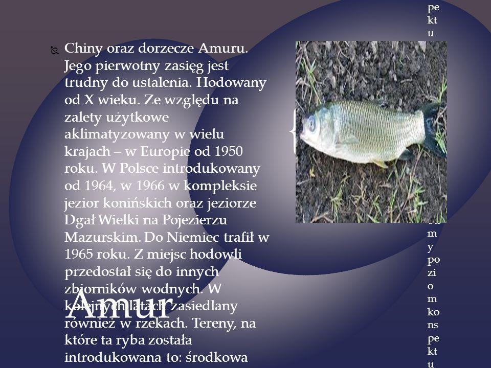 Chiny oraz dorzecze Amuru