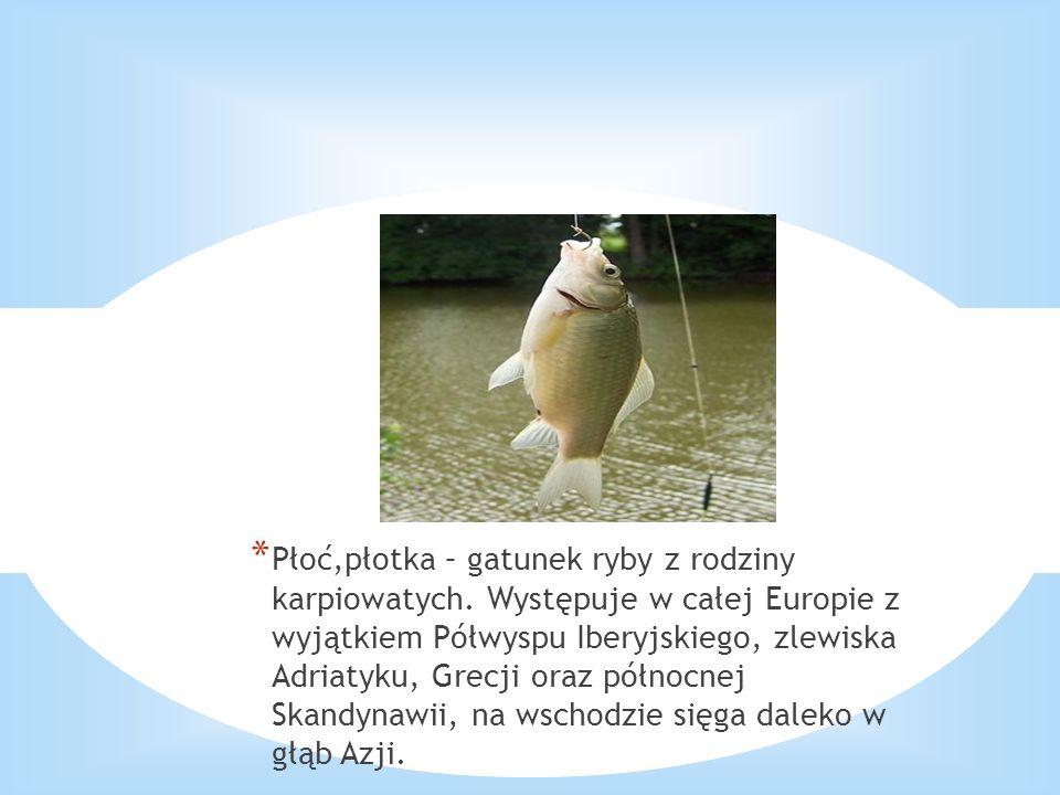 Płoć,płotka – gatunek ryby z rodziny karpiowatych