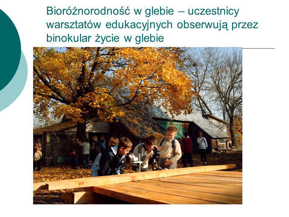 Bioróżnorodność w glebie – uczestnicy warsztatów edukacyjnych obserwują przez binokular życie w glebie