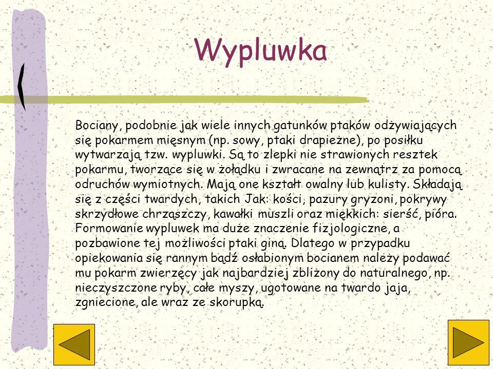 Wypluwka