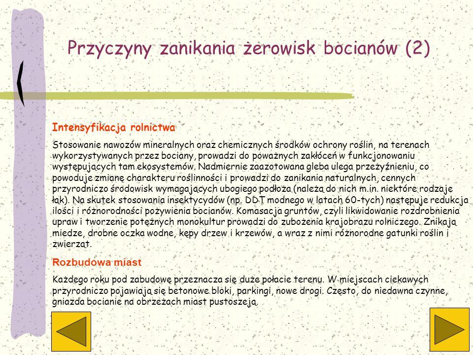 Przyczyny zanikania żerowisk bocianów (2)