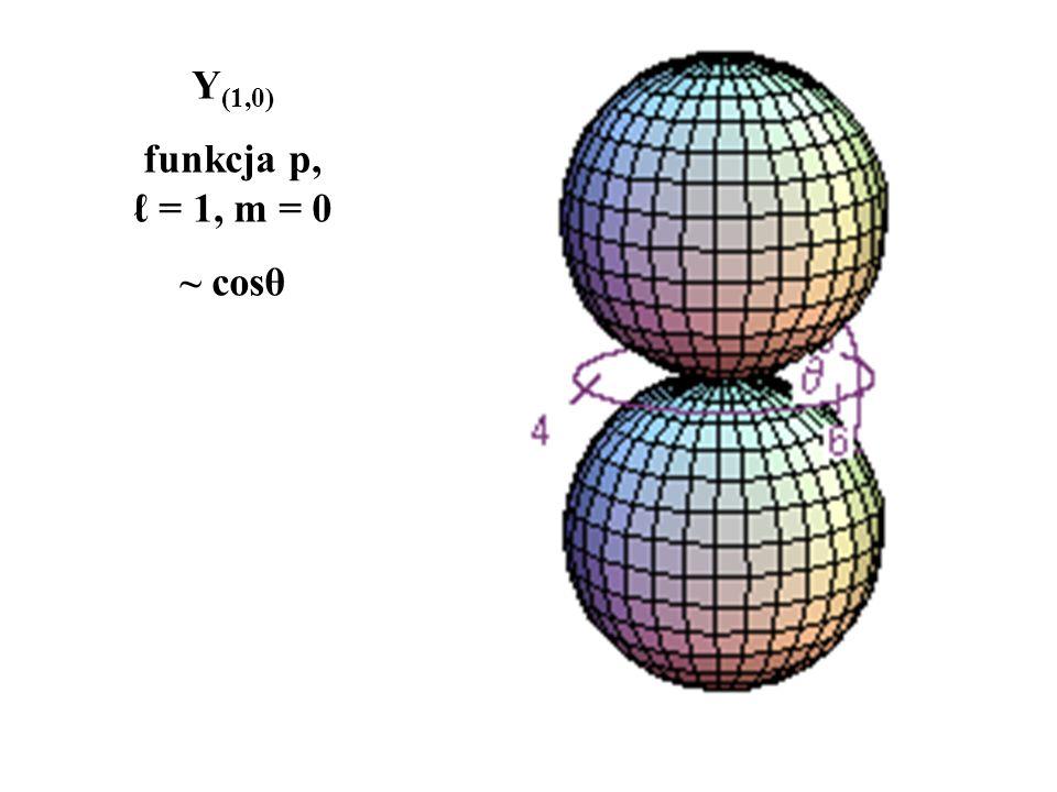 Y(1,0) funkcja p, ℓ = 1, m = 0 ~ cosθ