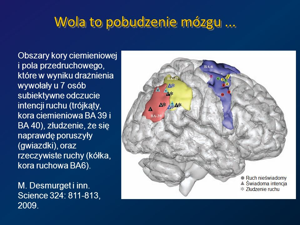 Wola to pobudzenie mózgu ...