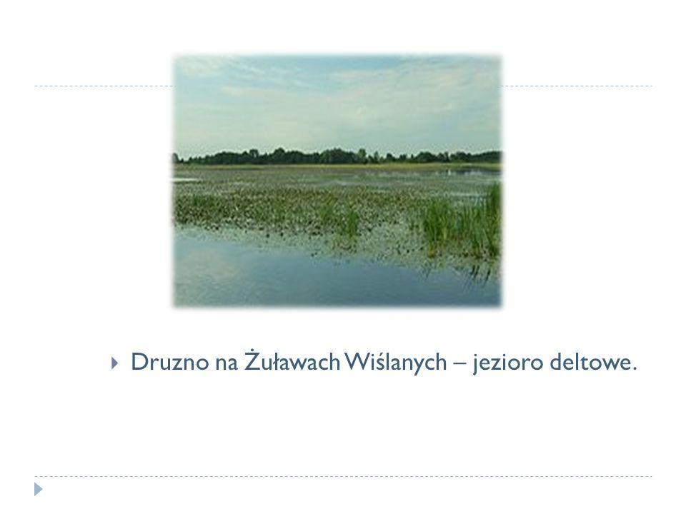 Druzno na Żuławach Wiślanych – jezioro deltowe.