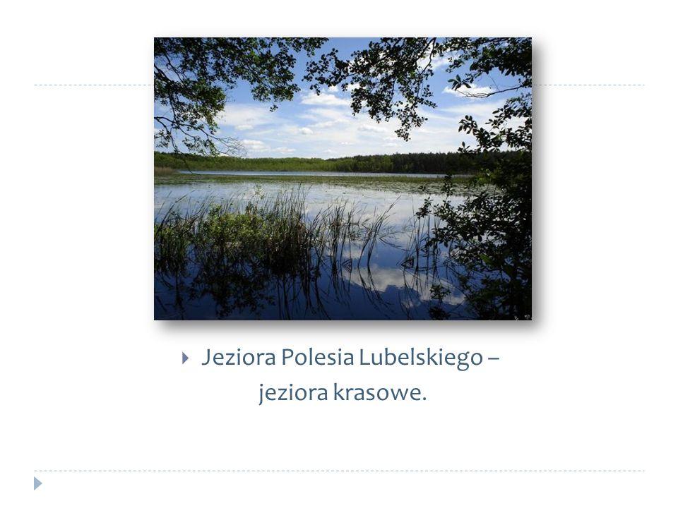 Jeziora Polesia Lubelskiego –